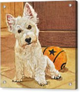 West Highland Terrier Puppy Acrylic Print
