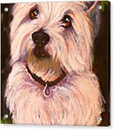 West Highland Terrier Reporting For Duty Acrylic Print by Susan A Becker