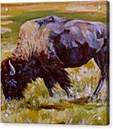 Western Icon Acrylic Print