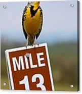 Western Meadowlark On The Mile 13 Sign Acrylic Print