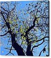 Western Michigan Trees 1 Acrylic Print