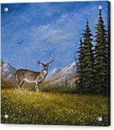 Western Whitetail Acrylic Print