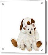 Westie Puppy And Teddy Bear Acrylic Print