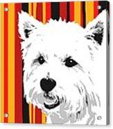 Westie With Stripes Acrylic Print