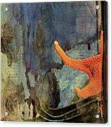 Wet #2 Acrylic Print