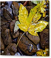 Wet Autumn Leaf On Stones Acrylic Print