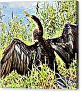 Wet Feathers Acrylic Print