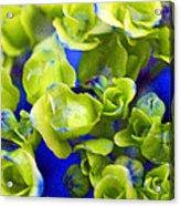 Wet Hydrangea Acrylic Print