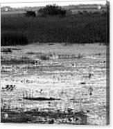 Wet Landscape Acrylic Print
