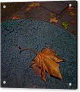 Wet Leaf Acrylic Print by Mike Horvath