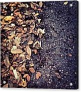 Wet Leaves In November Acrylic Print
