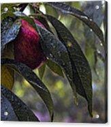 Wet Peach Acrylic Print
