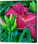 Wet Red Razzmatazz Daylily 2 Acrylic Print