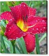 Wet Red Razzmatazz Daylily 1 Acrylic Print