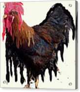 Wet Rooster Acrylic Print