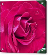 Wet Rose Acrylic Print by Kenneth Feliciano