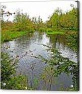 Wetland Greens Acrylic Print