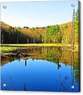 Wetland Morning Calm Acrylic Print