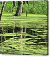 Wetland Reflection Acrylic Print