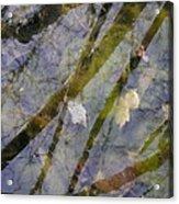 Wetland Reflections Acrylic Print