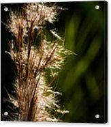 Wetland Sparkles Acrylic Print