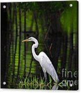 Wetland Wader Acrylic Print