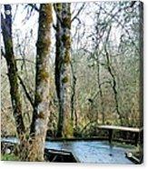 Wetlands In March Acrylic Print