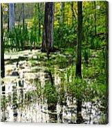 Wetlands Acrylic Print