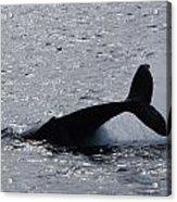 Whale Bw Acrylic Print