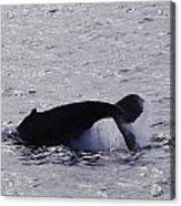 Whale Bw2 Acrylic Print by Lorena Mahoney