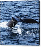 Whale  Acrylic Print by Lorena Mahoney