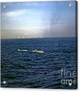 Whale Show Acrylic Print