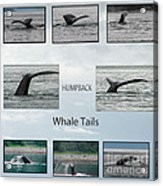 Whale Tails Acrylic Print