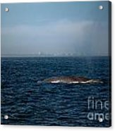 Whale Watching Acrylic Print
