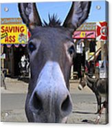 What . . . No Carrots Acrylic Print by Mike McGlothlen