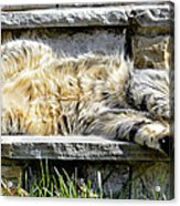 What A Day Acrylic Print
