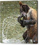 What A Show Little Bear Acrylic Print