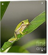 What Are You Waiting For  Acrylic Print