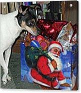 What Did Santa Bring Me Acrylic Print