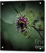 What Do You Do On My Flower Acrylic Print