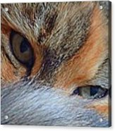 Who Disturbs My Cat Nap? Acrylic Print