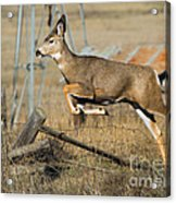 What Fence Acrylic Print