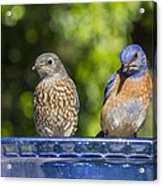 What Is It Acrylic Print