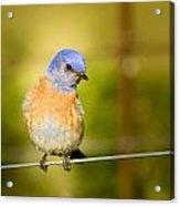 Bird On A Wire Acrylic Print