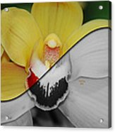 What Life Would Be Like Without Color Acrylic Print