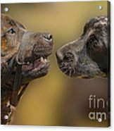 What Lovely Teeth You Have Acrylic Print