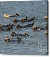 What Otters Do Best Acrylic Print