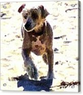 What Shall We Call Him? Acrylic Print by Brian D Meredith