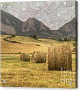 What The Hay Acrylic Print