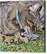 What's For Dinner Acrylic Print